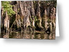 Heron And Cypress Knees Greeting Card