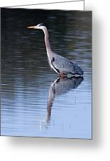 Heron Reflection Greeting Card