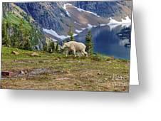 Hidden Landscape In Widescape Greeting Card