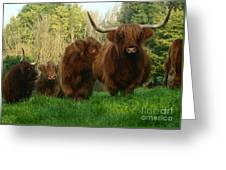 Highland Cows Greeting Card