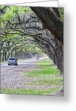 Historic Wormsloe Plantation Greeting Card