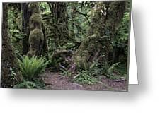 Hoh Rain Forest 3389 Greeting Card