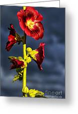 Hollyhock And Storm Clouds Greeting Card