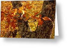 Hometown Series - Deep In The Woods Greeting Card