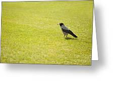 Hooded Crow Bird Gathering Hay Greeting Card