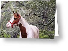 Horse 019 Greeting Card