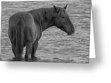 Horse 10 Greeting Card