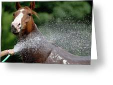 Horse Bath II Greeting Card