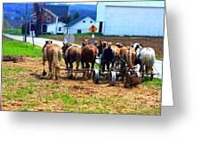 Horse Team Greeting Card