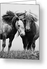 Horses 2 Greeting Card