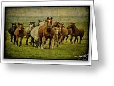 Horses 27 Greeting Card