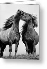 Horses 6 Greeting Card