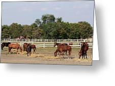 Horses Eat Hay On Ranch Greeting Card