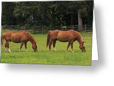 Horses In A Field Greeting Card