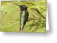 Hummer On Watch Greeting Card