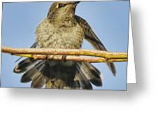 Hummingbird On A Branch Greeting Card