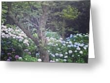 Hydrangea Flowers  Greeting Card