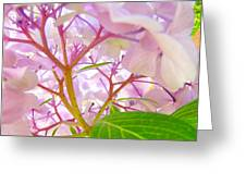 Hydrangeas Flowers Art Prints Hydrangea Art Giclee Baslee Troutman Greeting Card