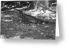 I Iguana Greeting Card