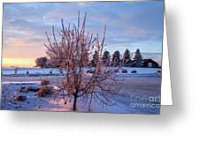 Icy Tree At Sunset  Greeting Card