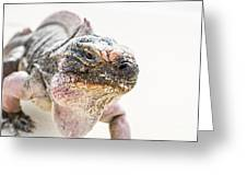 Iguana On The Beach Greeting Card