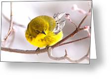 Img_0001 - Pine Warbler Greeting Card