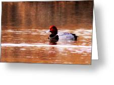 Img_0001 - Redhead Greeting Card
