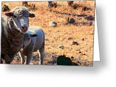 Impoverished Sheep Greeting Card