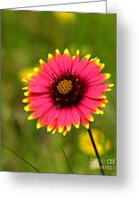 Indian Blanket Greeting Card