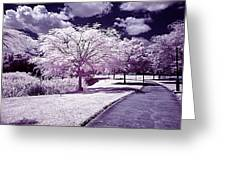 Infrared Garden Greeting Card