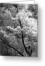 Infrared Tree Pic Greeting Card