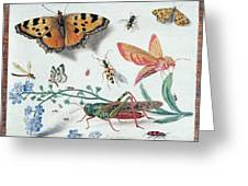 Insects And Garden Pansy Greeting Card