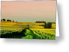 Iowa Cornfield Panorama Greeting Card