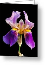 Iris 5 Greeting Card