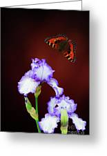 Iris And Butterfly Greeting Card