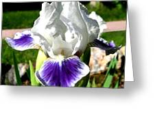 Iris Elegance Greeting Card
