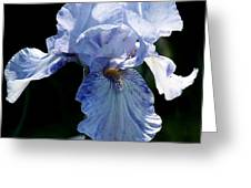 Iris Photograph Greeting Card