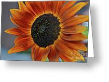 Isabella Sun Greeting Card