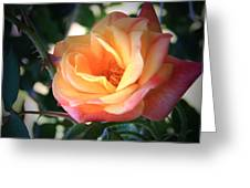 Jacob's Rose Greeting Card