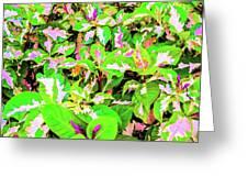Jamaican Croton Greeting Card