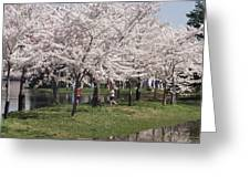 Japanese Cherry Blossom Trees Greeting Card