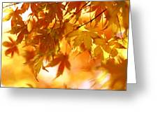 Japanese Maple In Fall Greeting Card