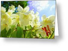 Jasmine Fly-by Greeting Card