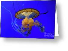 Jellyfish At California Academy Of Sciences In San Francisco, California Greeting Card