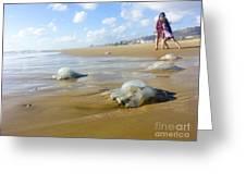 Jellyfish On The Beach  Greeting Card