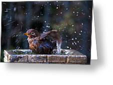 Juvenile Blackbird Greeting Card