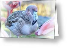 Juvenile Flamingo Greeting Card