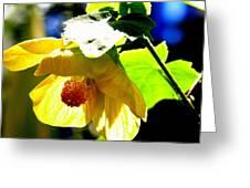 Kew Gardens Greeting Card