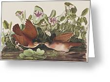 Key West Dove Greeting Card