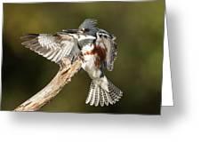 Kingfisher Greeting Card